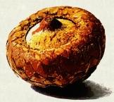 acorn_impressionist
