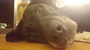 My dog is a sleeping champion.